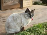 愛猫チョビ(なんと23歳)