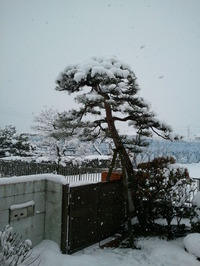 オセロ中島(中島知子)さんの早期復帰を祈願します